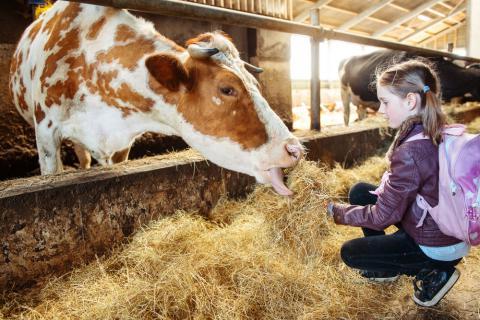 Qué actividades realiza un monitor en una granja escuela